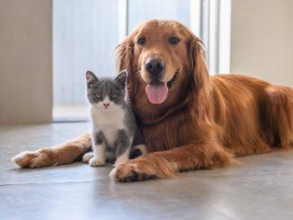 Seguro Sura para mascotas